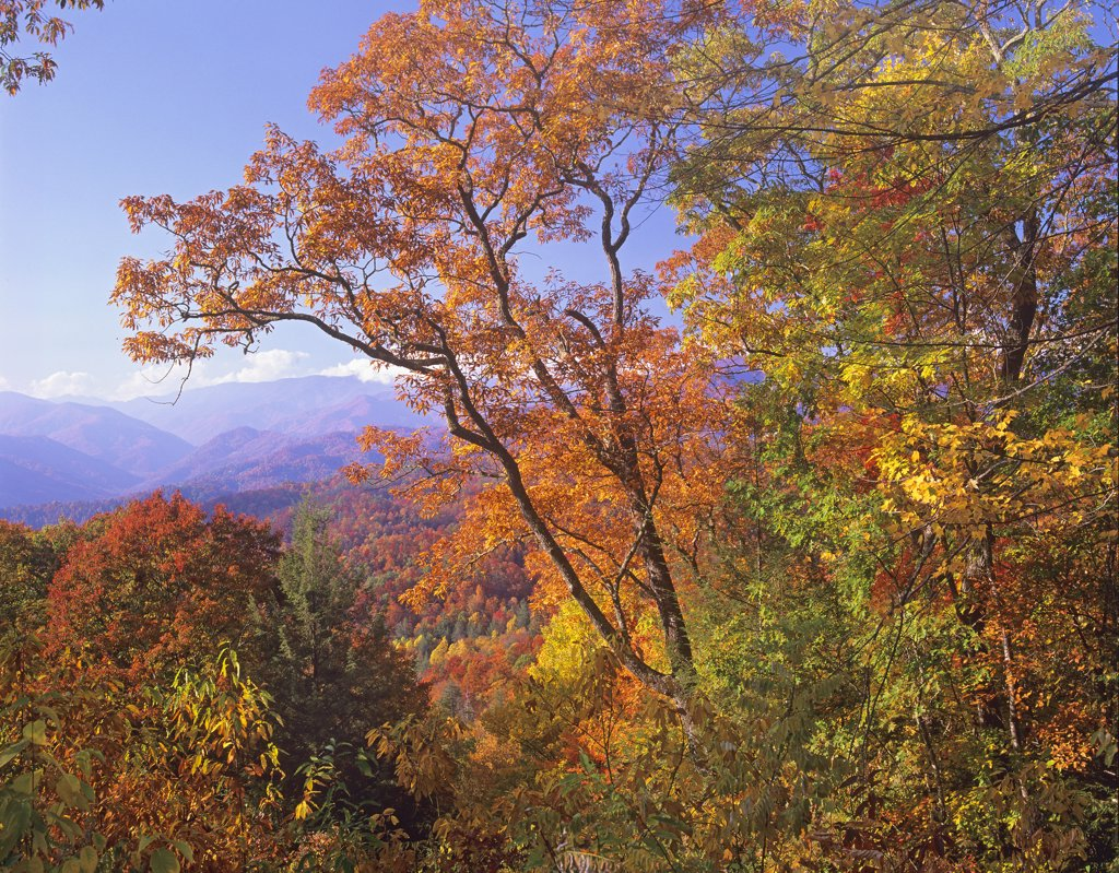 Stock Photo: 4201-6951 Great Smoky Mountains from, Blue Ridge Parkway, North Carolina