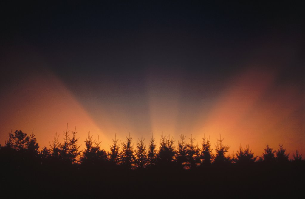 Stock Photo: 4201-70417 Sunset over coniferous forest, Minnesota