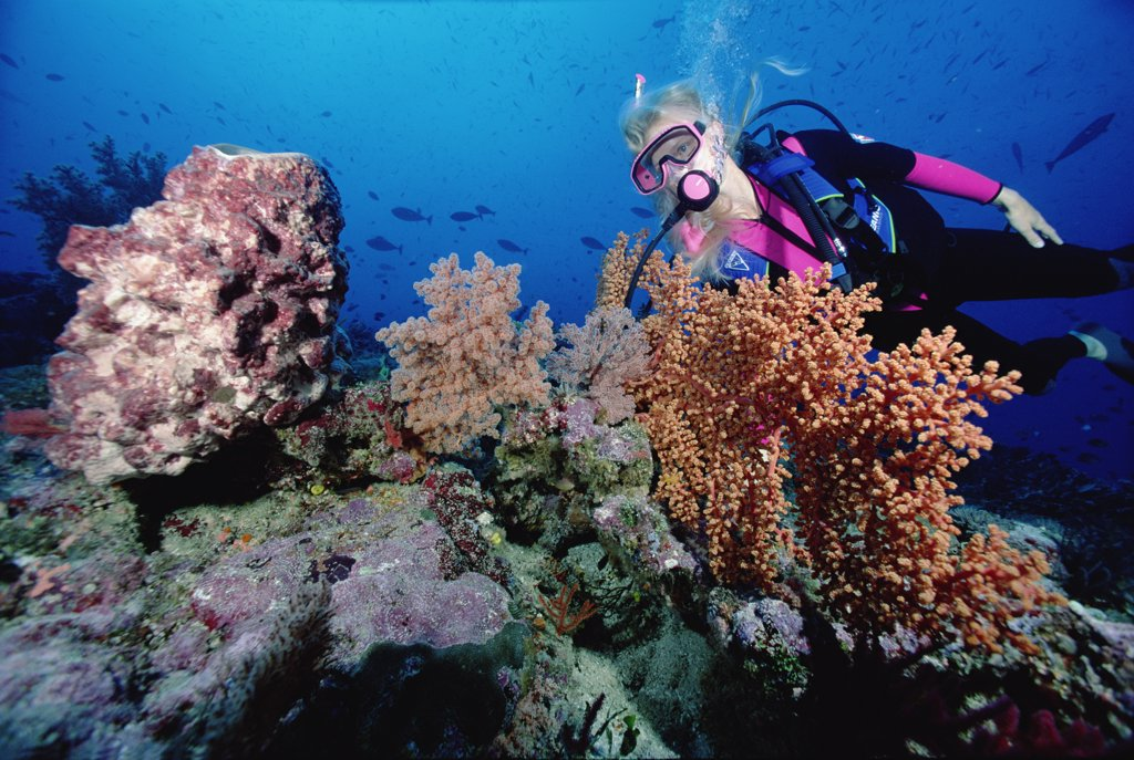 Stock Photo: 4201-70866 Birgitte Wilms scuba diving near coral reef, 60 feet deep, Solomon Islands