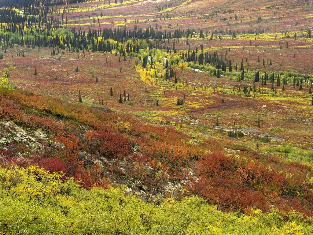 Stock Photo: 4201-7161 Autumn tundra with boreal forest, Tombstone Territorial Park, Yukon Territory, Canada