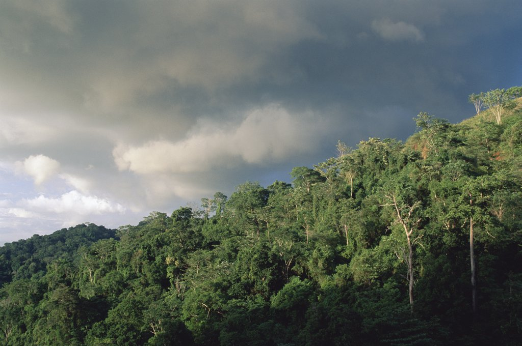 Stock Photo: 4201-73341 Rainforest canopy in the Carara National Park, Costa Rica