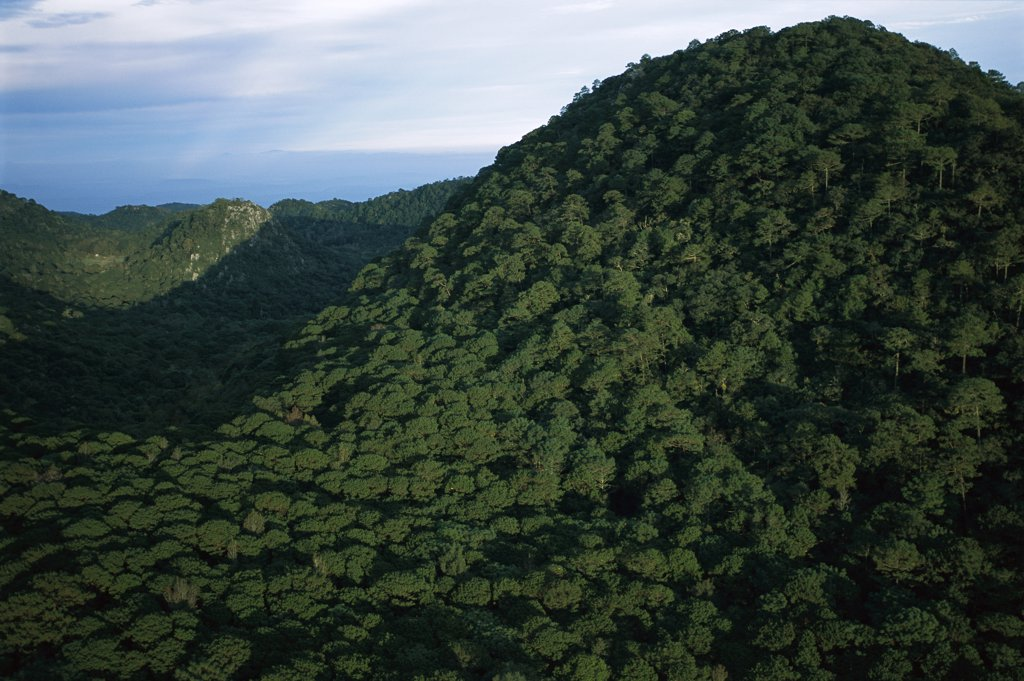 Stock Photo: 4201-74123 Mountains covered with dense cloud forest, El Cielo Biosphere Reserve in the mountains of the Sierra Madre Oriental, Tamaulipas, northeast Mexico