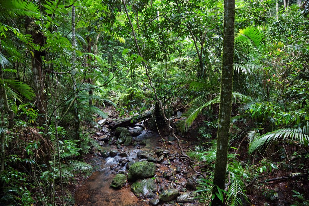 Stock Photo: 4201-85223 Creek in rainforest, Daintree National Park, North Queensland, Queensland, Australia