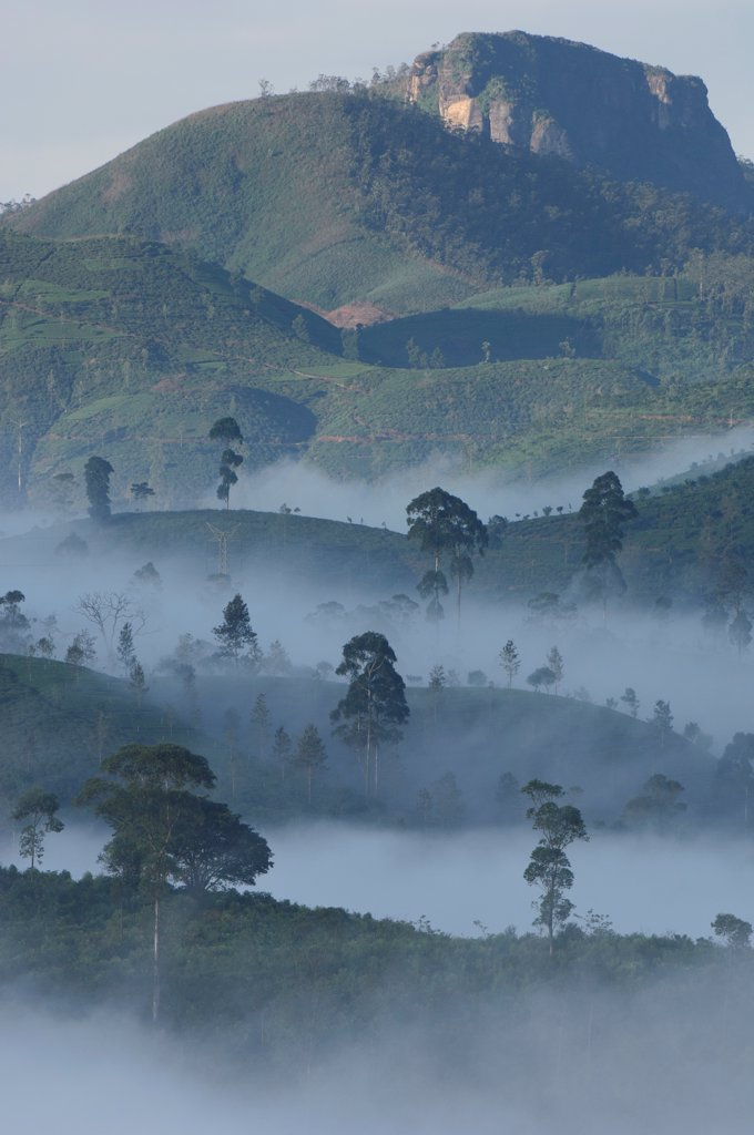 Stock Photo: 4201-87268 Mountain forest with morning mist, Lindulla, Sri Lanka