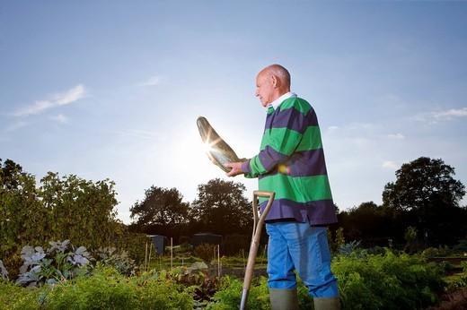 Stock Photo: 4208R-10368 Man holding large squash in garden
