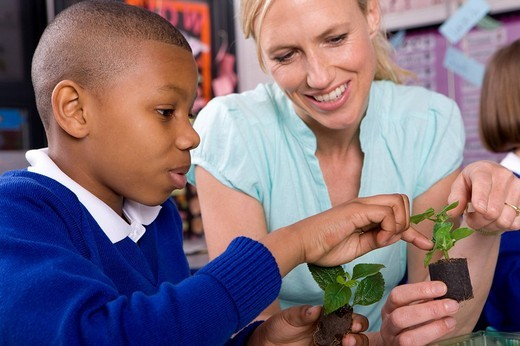 Stock Photo: 4208R-10863 Teacher and school boy looking at plant seedlings in classroom