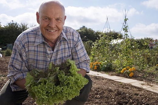 Senior man in checked shirt holding fresh leaf vegetable in garden, crouching, smiling, portrait : Stock Photo