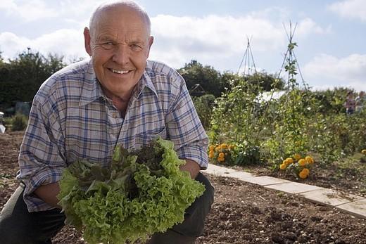 Stock Photo: 4208R-14779 Senior man in checked shirt holding fresh leaf vegetable in garden, crouching, smiling, portrait