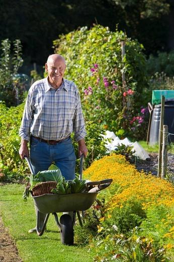 Stock Photo: 4208R-15299 Man picking vegetables in garden