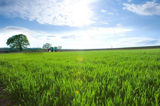 Sun shining over tractor in young wheat field : Stock Photo