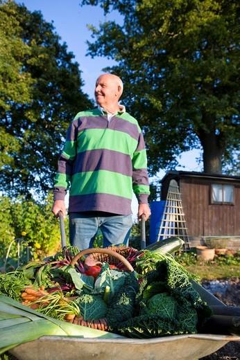 Stock Photo: 4208R-20450 Man picking vegetables in garden