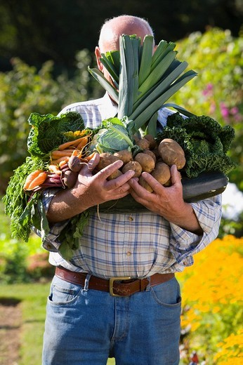 Stock Photo: 4208R-20453 Man holding vegetables in garden