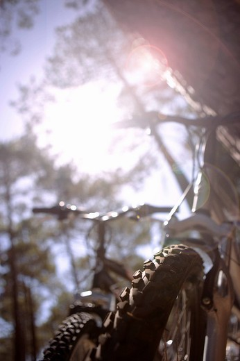 Bicycles in forest, low angle view lens flare : Stock Photo