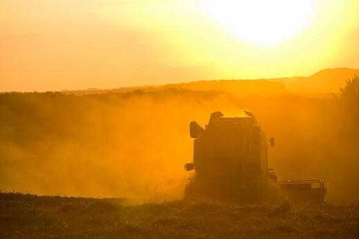 Stock Photo: 4208R-25407 Sun over combine harvesting wheat in rural field