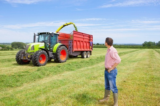 Stock Photo: 4208R-28108 Farmer watching tractors harvest hay in field