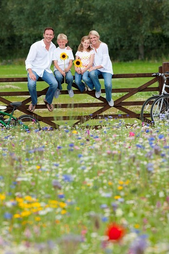 Portrait of smiling family holding sunflowers on fence in wildflower field : Stock Photo