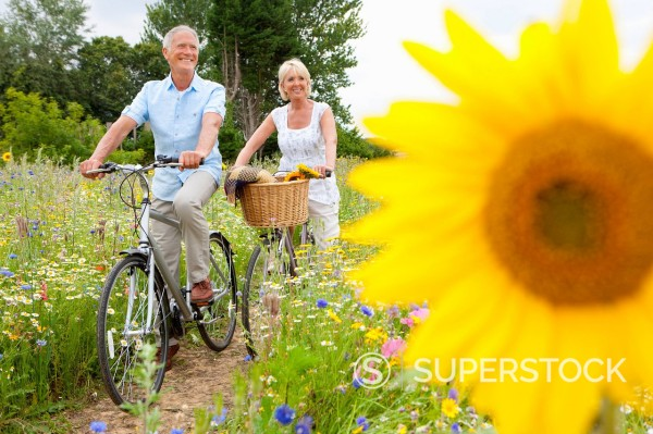 Smiling senior couple riding bicycles on path through field of wildflowers with sunflower in foreground : Stock Photo