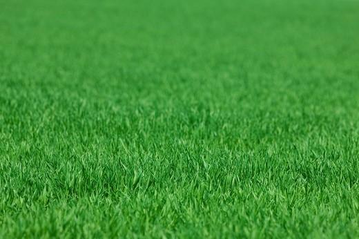 Close up of grass crop : Stock Photo