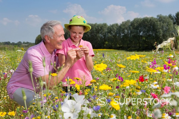 Smiling grandfather and granddaughter among wildflowers in meadow : Stock Photo