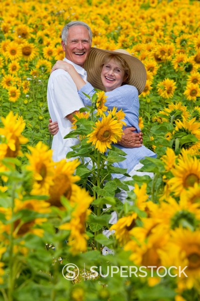 Portrait of smiling couple among sunflowers in sunny meadow : Stock Photo