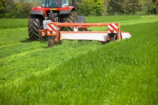Tractor cutting silage in farm field : Stock Photo