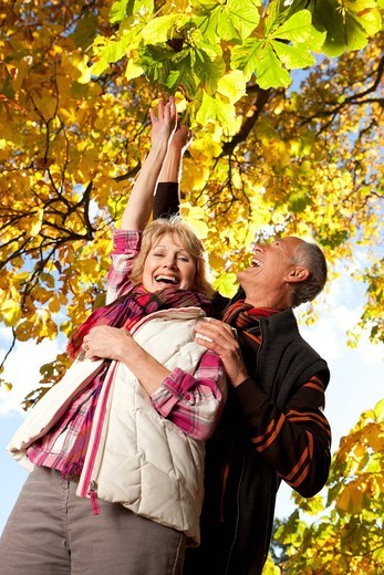 Smiling senior couple picking autumn leaves from tree together : Stock Photo