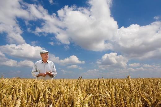 Stock Photo: 4208R-6565 Farmer standing in wheat field