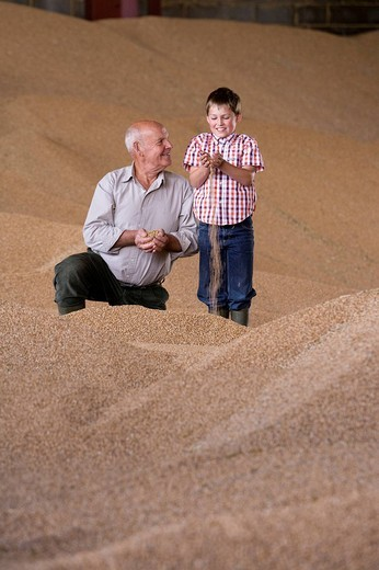 Farmer and grandson cupping wheat grains on grain heap : Stock Photo