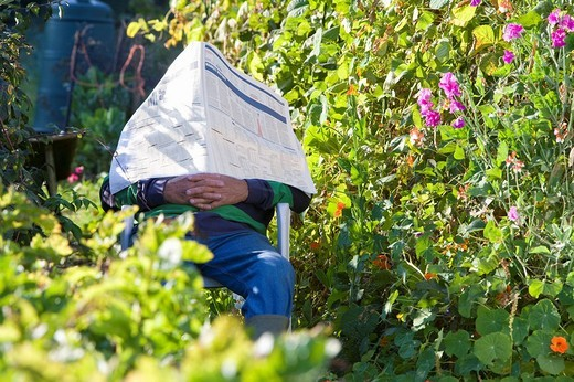 Stock Photo: 4208R-6929 Man napping under newspaper in garden