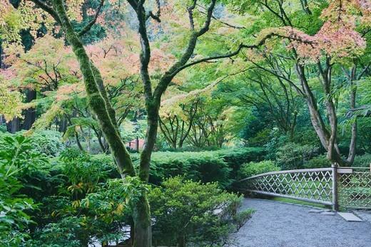 Japanese Garden.  Portland, Oregon, USA : Stock Photo
