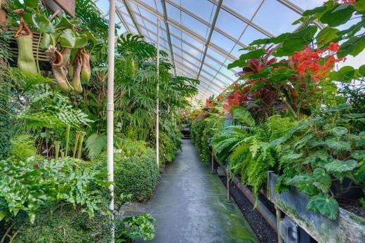 Volunteer Park Conservatory, Seattle, Washington, USA : Stock Photo