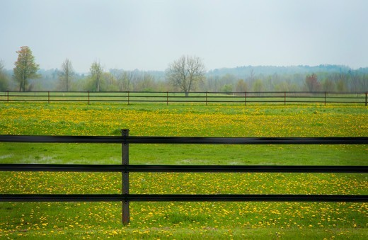 Electric fence in field, Ontario, Canada : Stock Photo