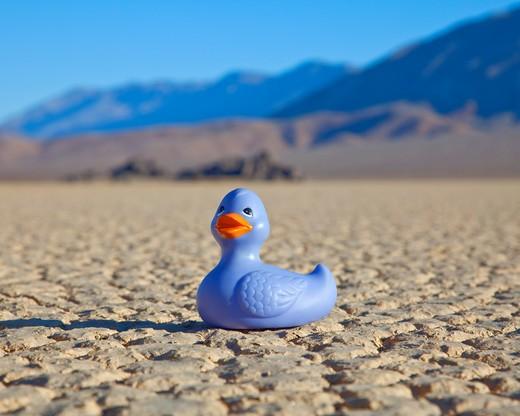 Rubber Duck in Desert : Stock Photo