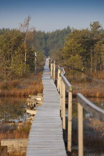 Estonia , Wooden Boardwalk over Marsh : Stock Photo
