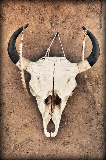 Taos, New Mexico, USA , Cow Skull : Stock Photo