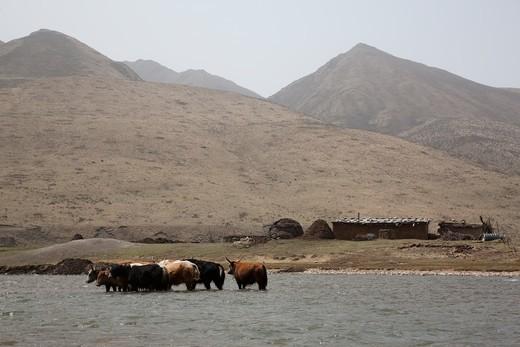 Qinghai Tibet : Stock Photo