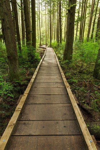 Duthie Hill Park, Issaquah, Washington, USA : Stock Photo