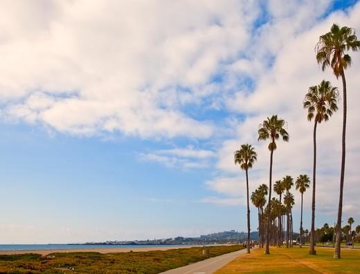 Palm Trees on Beach Sidewalk : Stock Photo