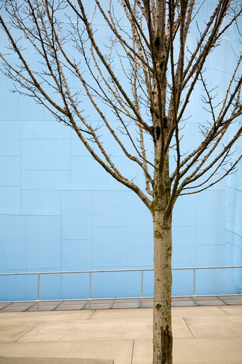 Tree Against Building : Stock Photo