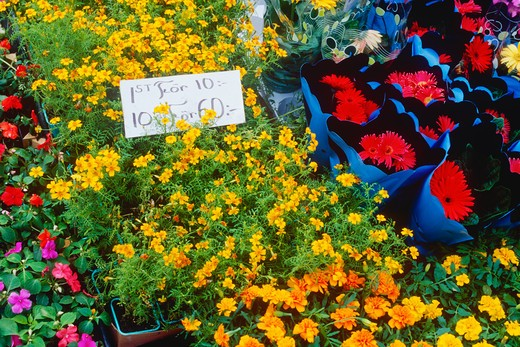Flowers at a Market Stall : Stock Photo