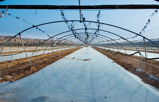 Israel, Uncovered Greenhouse : Stock Photo