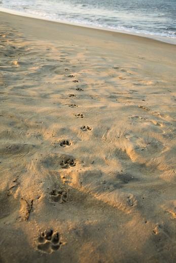 Virginia Beach, Virginia, USA , Paw Prints In The Sand : Stock Photo