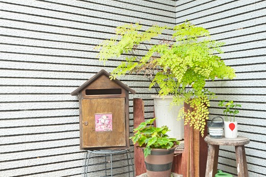 A corner outside a house, with a mailbox and green plants. Postbox. : Stock Photo