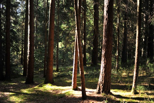 Stock Photo: 4233R-1058 Germany, Bavaria, Sunlight in green forest