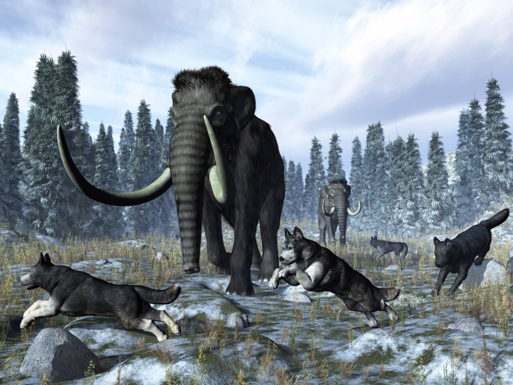 Stock Photo: 4239-827 A pack of dire wolves crosses paths with two mammoths 150 thousand years ago during the Upper (Tarantian) Pleistocene Epoch in North America