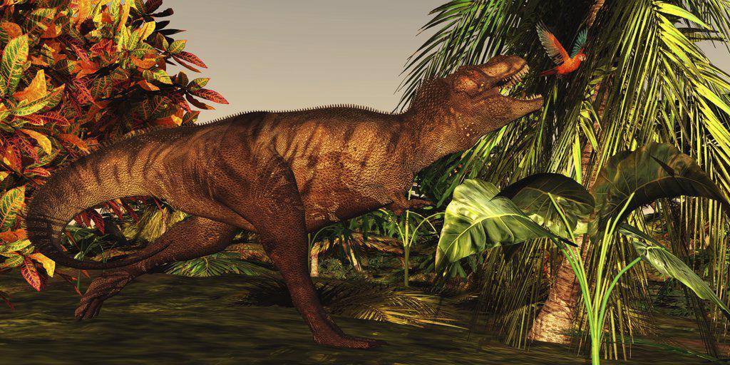 Stock Photo: 4239R-2724 A Tyrannosaurus Rex runs after a beautiful Cuban Red Macaw deep in the jungle.