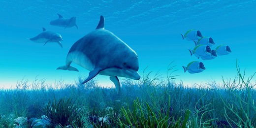 A school of blue tango fish beat a hasty retreat as a pod of dolphins show up on the scene. : Stock Photo