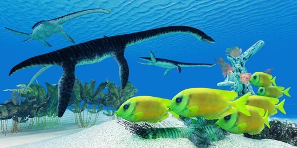 Stock Photo: 4239R-5825 A school of Lemonpeel Angelfish swim by Plesiosaurus dinosaurs.