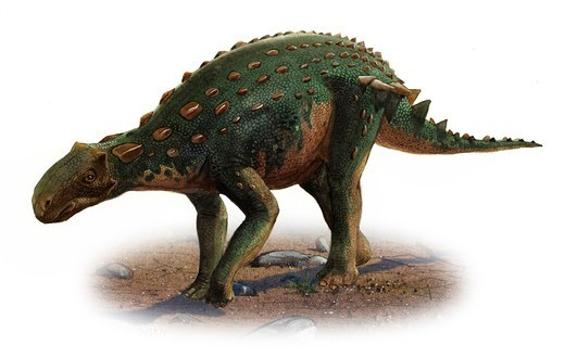 Stock Photo: 4239R-5941 Minmi paravertebra, a prehistoric era dinosaur.