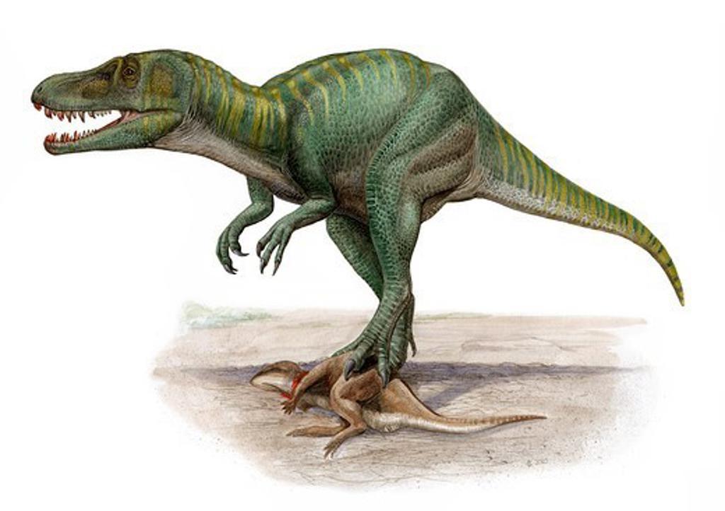 Stock Photo: 4239R-5968 Marshosaurus bicentesimus, a prehistoric era dinosaur.